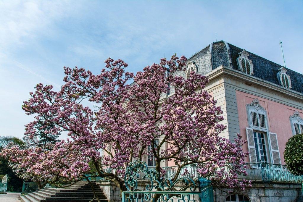 20150419-SchlossBenrath-DSC_1685.jpg