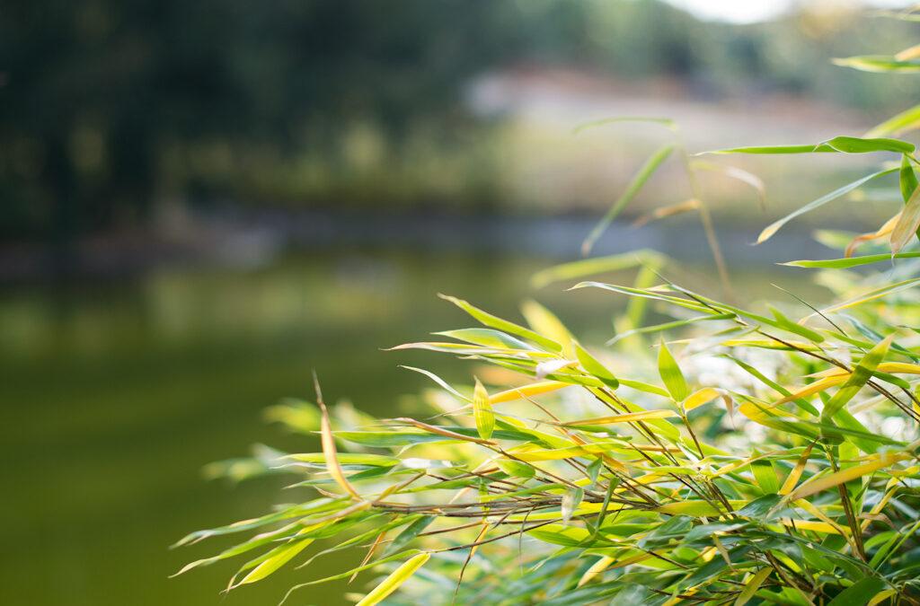 Botanischer Garten – mit AF-S 50mm 1:1,4G