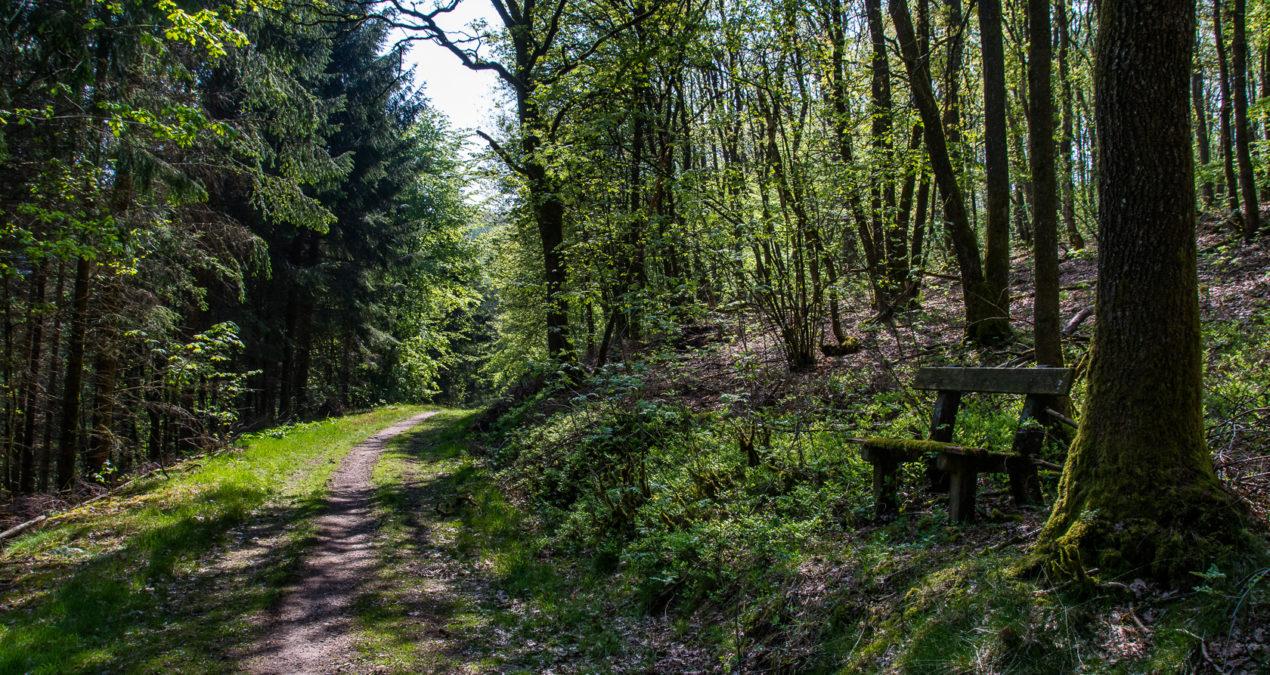 Das Finale vom Siegsteig, die Etappe 14 von Kirchen nach Mudersbach