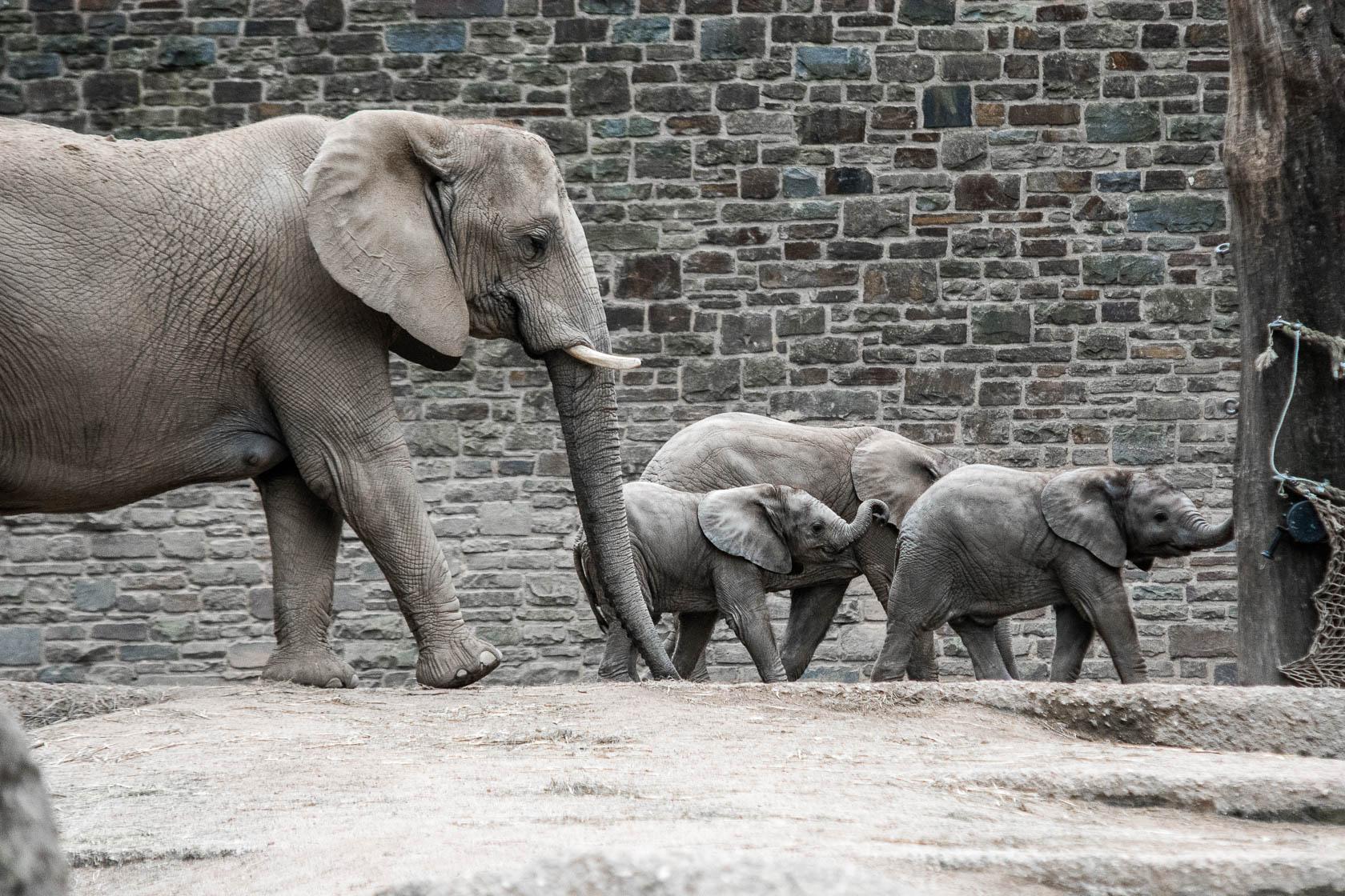 Ausflug in den Wuppertaler Zoo