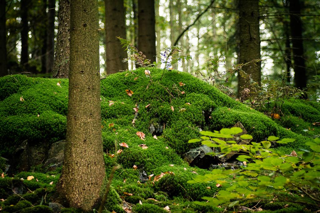 Im Cronenberger Wald unterwegs